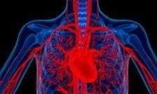 New artery imaging technique