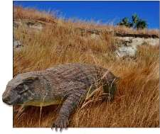 Bizarre fossil crocodile dispels notion that these reptiles are static and unchanging