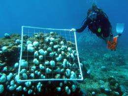 Caribbean reef ecosystems may not survive repeated stress