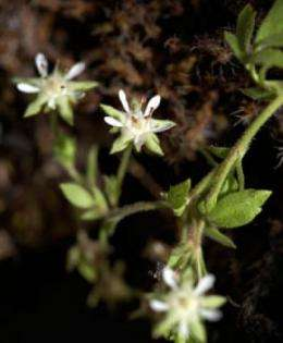 Climate change affects geographical range of plants
