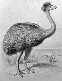 Elephant bird probably wiped out by nest raiders and habitat loss