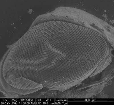 Fly Eye Paves the Way for Manufacturing Biomimetic Surfaces