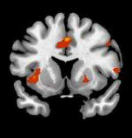 Frontal lobe of the brain is key to automatic responses to various stimuli, say scientists