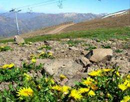 Mountain plants unable to withstand invasion