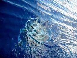 Ocean acidification changes nitrogen cycling in world seas