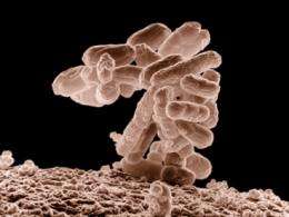 Researchers engineer microbes for low-cost production of anticancer drug Taxol