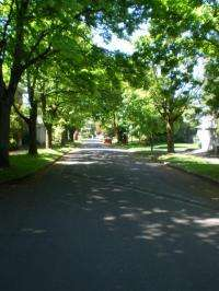 Some city trees may discourage 'shady' behavior