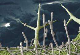 The dilemma of plants fighting infections