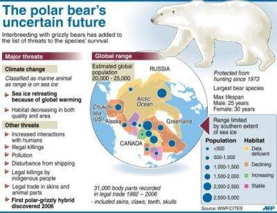 The polar bear's uncertain future