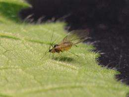 Virus pulls bait and switch on insect vectors