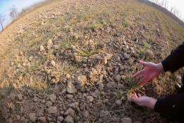 A Chinese farmer shows his drought-stricken fields in Bozhou