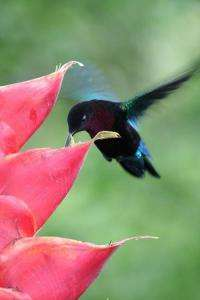 A well-defended territory is what some female hummingbirds find most attractive in a mate