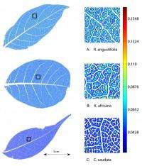 New software quantifies leaf venation networks, enables plant biology advances