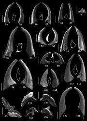 Oldest fossils found in Cordillera Betica mountain range