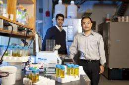 Princeton scientists discover mechanism involved in breast cancer's spread to bone