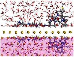 Simulations aim to unlock nature's process of biomineralization