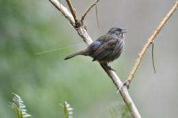 Only some like it hot: How birds from different populations react to infections