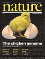 Nature Cover - chicken
