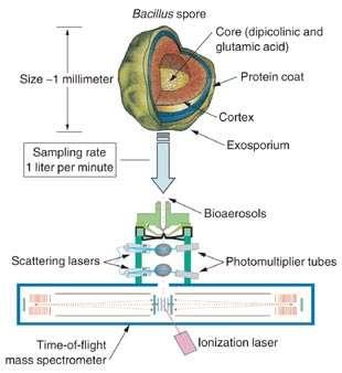 A schematic of a bioaerosol mass spectrometry ...