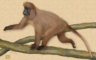 New Primate Discovered in Mountain Forests of Tanzania