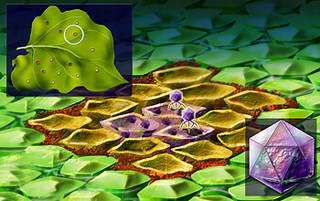 Plant Sacrifices Cells to Fight Invaders