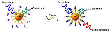 DNA probes capture the target strands of DNA...