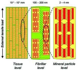 Bones at the nanoscale
