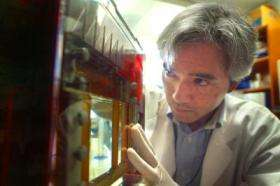 Finding paves way for better treatment of autoimmune disease