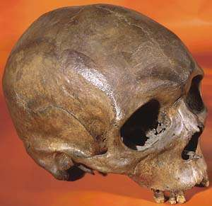 Homo sapiens: 'Out of Africa' three distinct times, new analysis shows