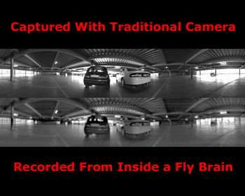 Video Cameras Learn from Insect Eyes