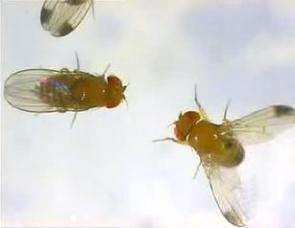 On a fly's wing, scientists tally evolution's winners and losses