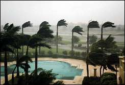 Palm trees at a hotel bend in fierce winds