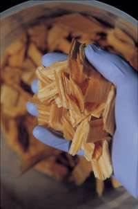 Wood chips used to make bioethanol.