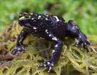 Colombian frog believed extinct found alive