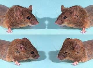 Scientists Reverse Evolution, Reconstruct Ancient Gene