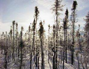 Fires in Far Northern Forests to Have Cooling, Not Warming, Effect