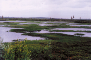 Rapid Growth of Huge Northern Bog Complex May Have Helped Kick-Start Past Global Warming