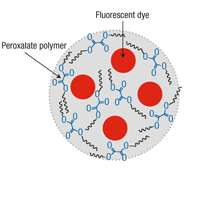 Nanoparticle Could Help Detect Many Diseases Early