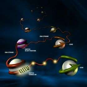 Scientists Reveal Structure of Gateways to Gene Control