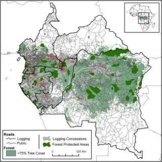 Scientists study impacts of industrial logging in Central Africa