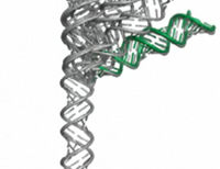 Nanovideo captures motion of RNA molecules in 3-D