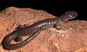 Global warming sends salamanders packing