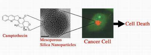 Researchers Develop New Nanomaterials to Deliver Anticancer Drugs to Kill Cancer Cells