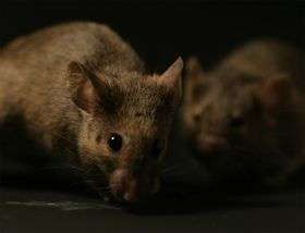Scientists reveal how mice recognise each other