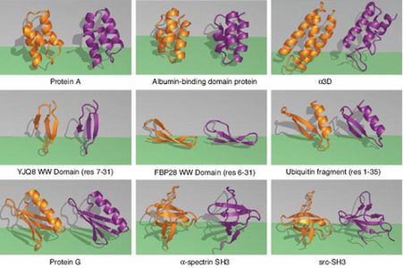 Divide-and-conquer strategy key to fast protein folding