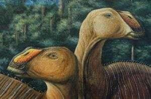 Artist's Rendering of Gryposaurus