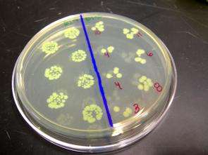 Assisting NASA in biology mission, Stanford helps E. coli visit the final frontier