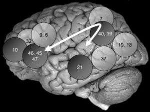 Brain Areas Important to Intelligence