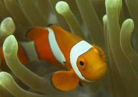 Can Nemo Find His Way Home?