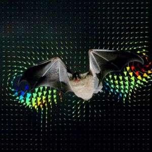 Cover of Science -- A Bat, Glossophaga soricina